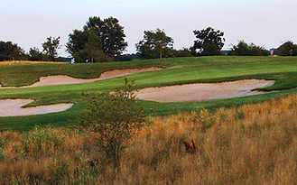 Whitetail 16 green.png