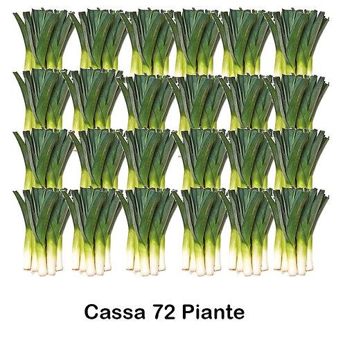 Cassa Plateau 72 Piante di Porri