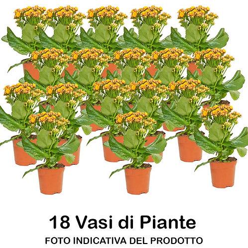 Cassa Plateau 18 Piante Tagete Fiore Piccolo in Vaso da 9 cm