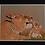 Thumbnail: Safari Bath Pastel Prints