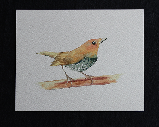 Speckled Chest Bird Watercolor Print