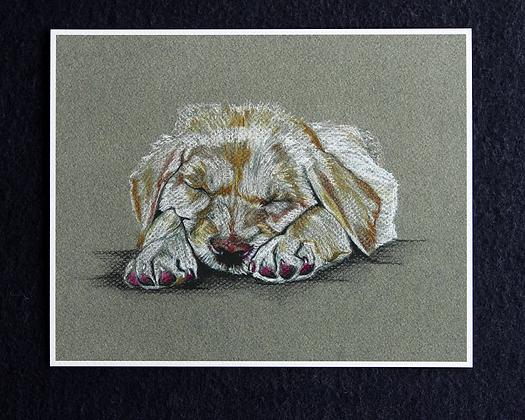 Sleeping Pup Pastel Print