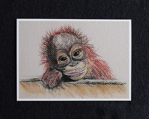 Silly Monkey Pastel Prints