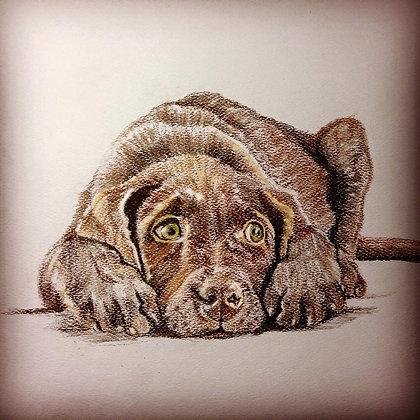Concerned Pup Original