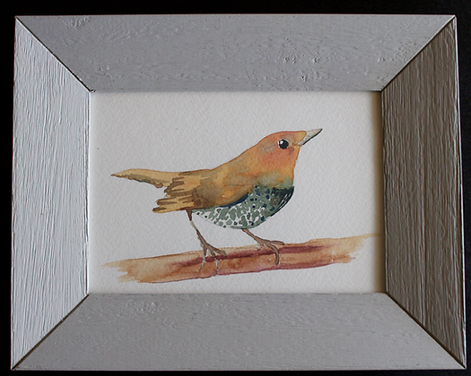 Speckled Chest Bird Original in frame