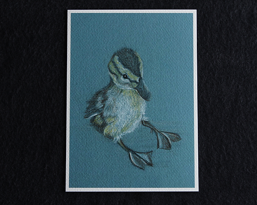 Sitting Duck Pastel Prints