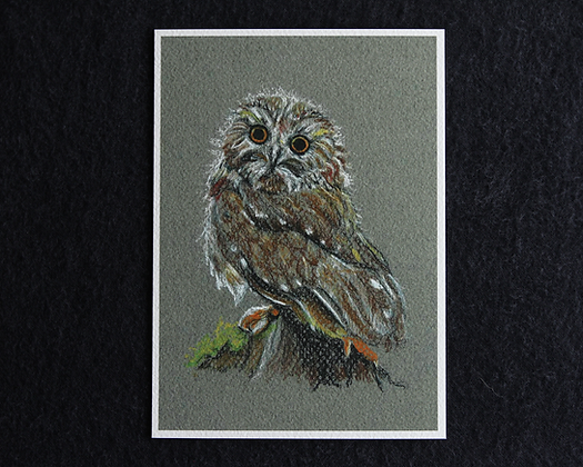 Wise Owl Pastel Print