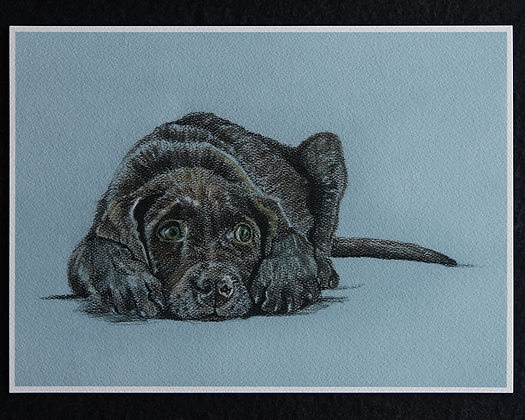 Chocolate Lab Pastel Print