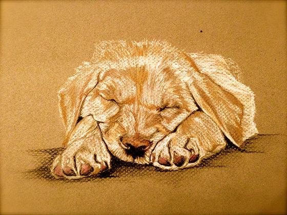 Sleepy Pup Original