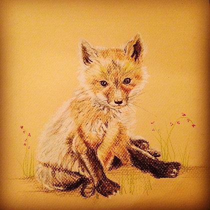 Sweet Fox Original