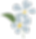 flower favicon 3.png