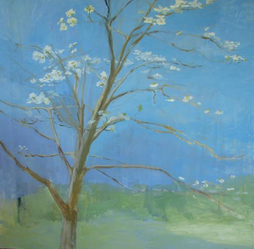 Dogwood - Spring 48x48