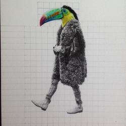 Tucan con abrigo