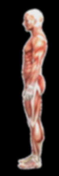Pain,back,head,knee,hip,performance,rehabilitation,sports,