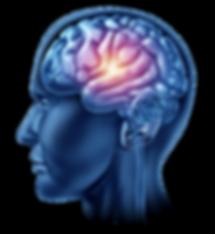 Neuro-science