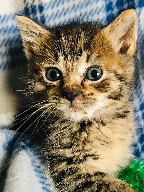 Adoptable kitten.