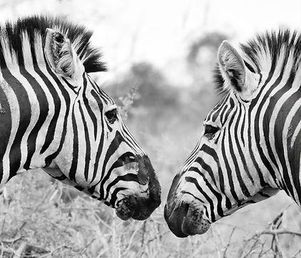 animal-animal-photography-blur-1595719.j