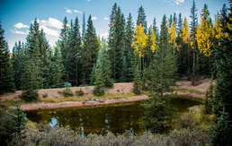 Bodhi Springs Gallary8.jpg