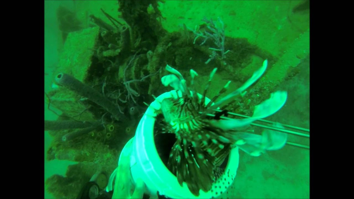 Hunting Lionfish on The Morning Star.