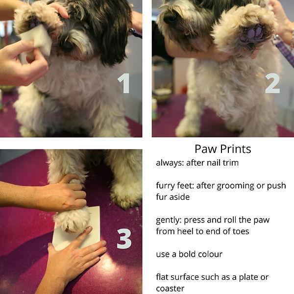 paw prints.jpg