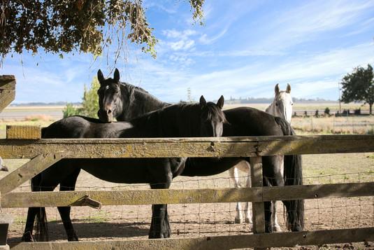 The Farm Horses