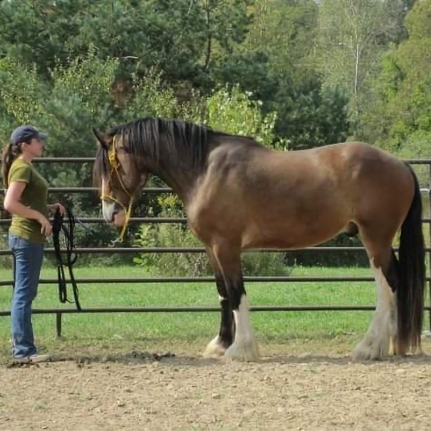 Shiloh Performance Horse Ground Work Clinic