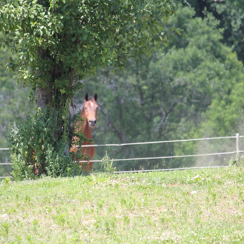 Horse Health 101