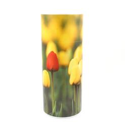 Tulips Scattering Tube
