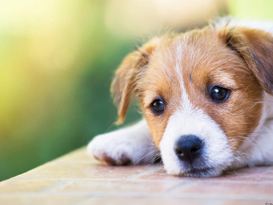 What to do with pets when the owner dies