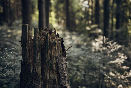 How much carbon is released from deforestation?