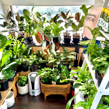 How to Prepare and Care for Your Houseplants in the Winter