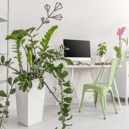 Our Plant Care: Zamioculcas zamiifolia