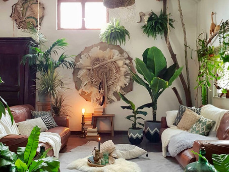How to Create your Indoor Jungle: Here are Our Favourite Plants for Apartments