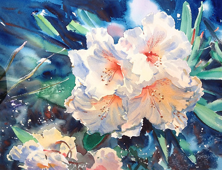 Rhododendrons V