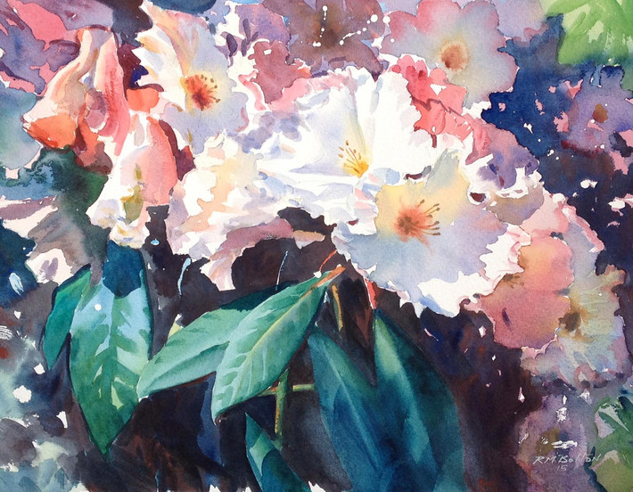 Rhododendrons II