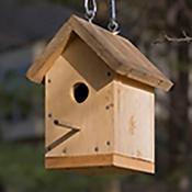 Birdhouses intro.png