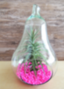 Air plant 12.png