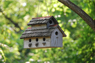 Birdhouses multiple.jpg