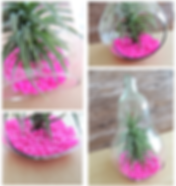 Air plant 13.png