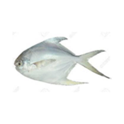 Pomfret ( White-Pei Chew) Whole Fish 白