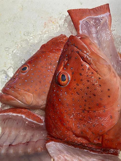 Red Grouper Head + Bone 红斑鱼  头+骨