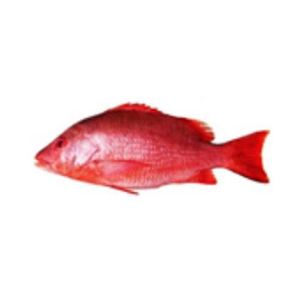 Red Snapper Fillet 红鸡鱼肉