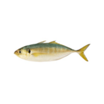 Sek lar ( Yellow Tail Scad) 色拉鱼