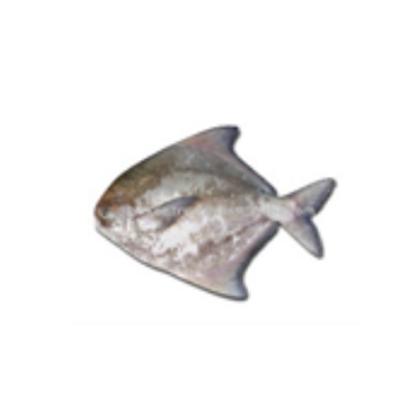 Pomfret ( Chinese-Tao Tau) Whole Fish 斗