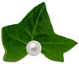 ivy-clipart-pearl-650731-7691222.png