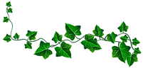 ivy-drawing-11.png