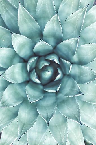 Succulent_edited.png