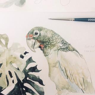Treasure Island parrot.jpg