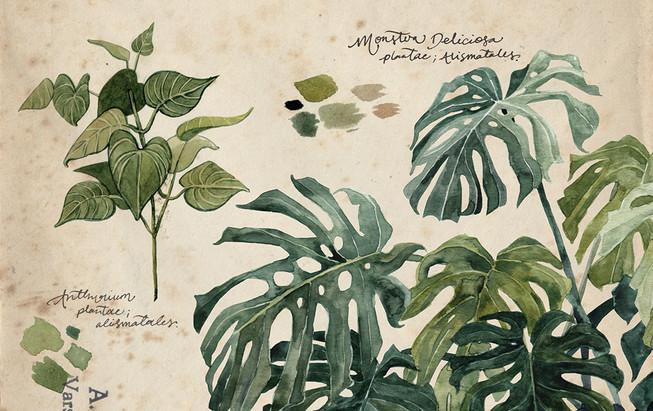plants2.annatromop.jpg
