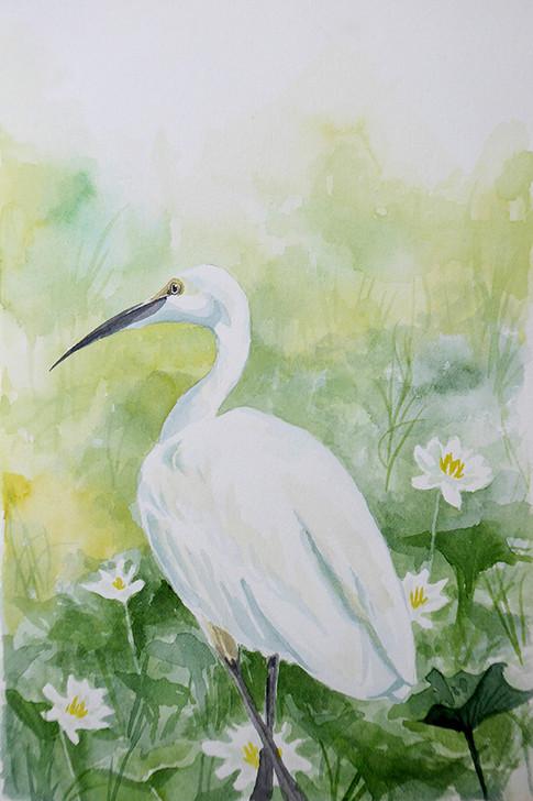 Sri Lanka Bird web.jpg